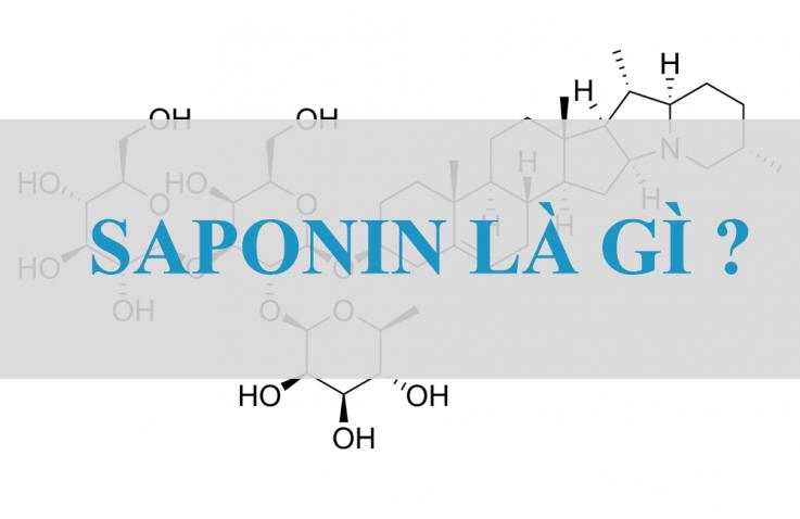 Saponin trong yến mạch có lợi ích gì ?